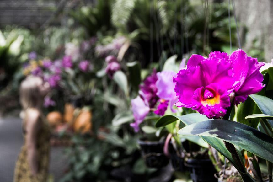 Паттайя тропический сад нонг нуч
